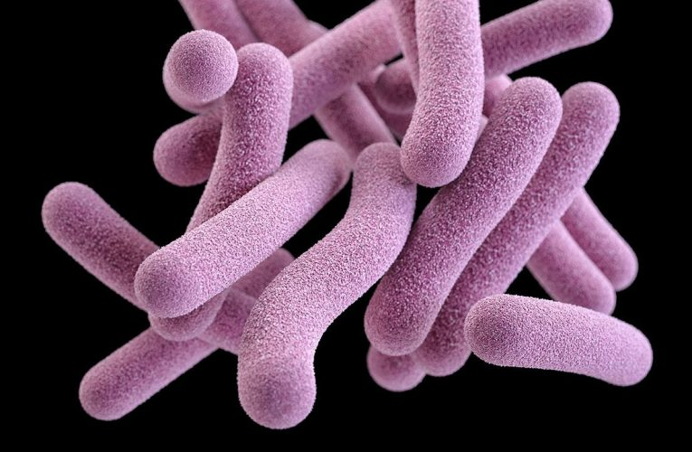 Chloroquine Renders Tuberculosis Bacteria More Receptive Of Other Antimalarial Drugs