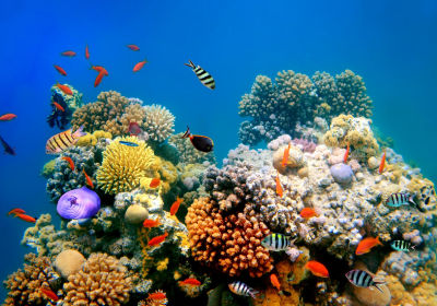 Warming Acidic Oceans Might Almost Wipe Out Coral Reef Home By 2100