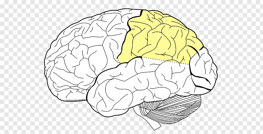 How-Prominent-Brain-Region-Merges-Visual-And-Spatial-Particulars-To-Traverse