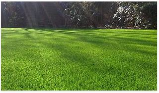 Understanding the Advantages and Disadvantages of Artificial Grass Adelaide